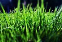 Чому трава зелена?