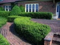 """Как сделать """"живой"""" забор из растений"""