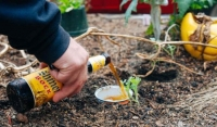 Як знищити слимаків на городі народними засобами