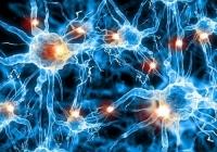 Раннее выявление болезни Альцгеймера с помощью языка