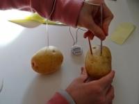 Как сделать из картошки светильник без электричества