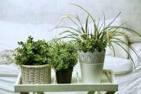 6 растений, которые идеально подойдут вашей комнате