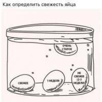 Как определить свежесть яйца. А вы знали это?
