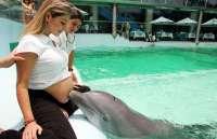 Приснились дельфины. Что означают дельфины во сне