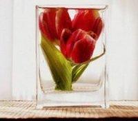 Квіти в гліцерині майстер клас