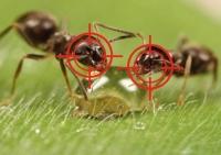 Як позбутися від мурашок на городі дачної ділянки