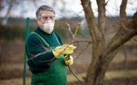 Чим обробити плодові дерева ранньою весною від шкідників