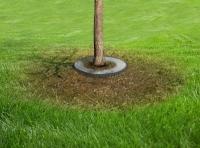 Як швидко позбутися від мурашок в городі