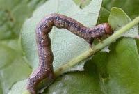 Найнебезпечніші шкідники вашого саду та городу. Фото