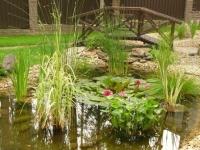 Які рослини краще посадити біля штучного ставка