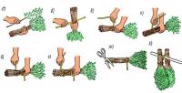 Коли і як правильно заготовлювати дубові віники для лазні