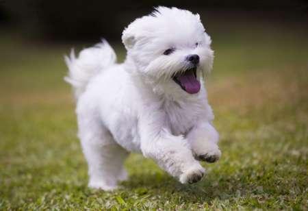 Топ 5 добрейших собак в мире